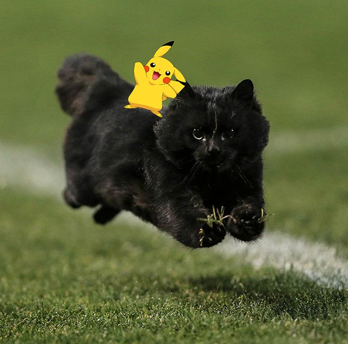 Pokemon Cat