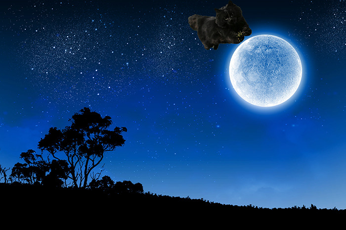 Cat Jumped Over The Moon