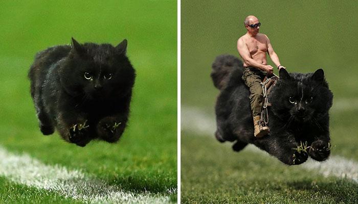 Cat Interrupts A Rugby Game, Internet Responds (PS Battle)