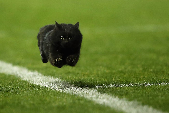 flying-cat-rugby-game-photoshop-battle-original