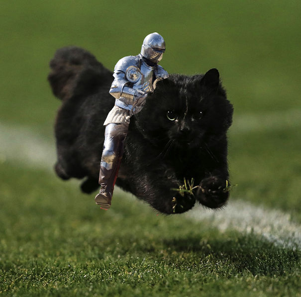 flying-cat-rugby-game-photoshop-battle-original-imagejpg-578644268ad1b-png.jpg