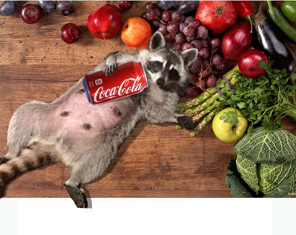 Foody Racoon