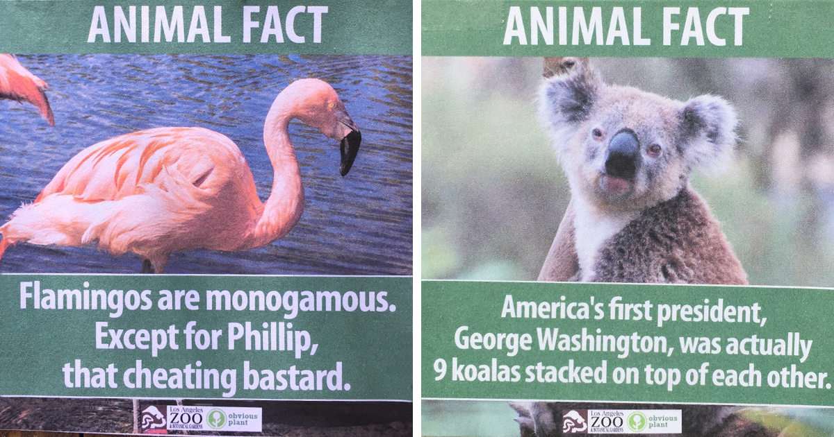 Funny Zoo Memes : Guy leaves fake animal facts all over los angeles zoo bored panda