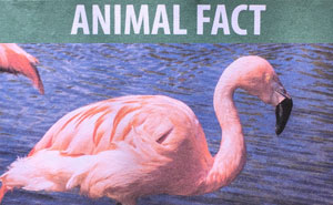 Guy Leaves Fake Animal Facts All Over Los Angeles Zoo