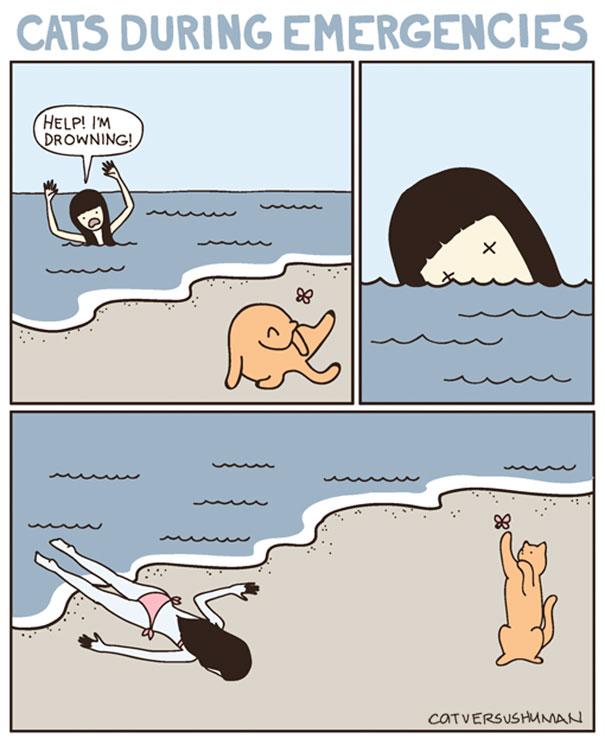 Dogs Vs Cats In Emergencies