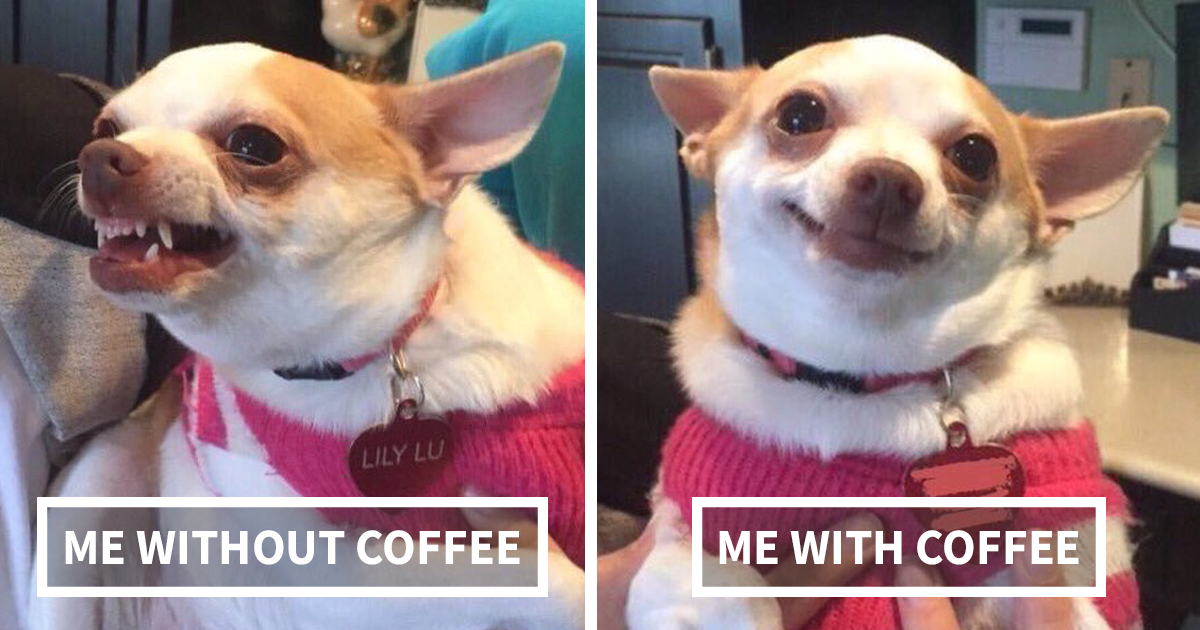 58 tweets that people who can t live without coffee will understand