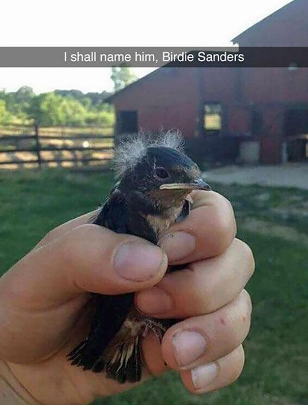 Birdie Sanders