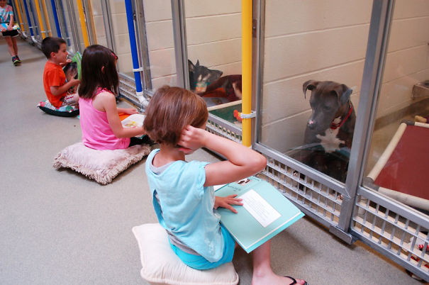 Children Practice Their Reading Skills To Calm Shy Shelter Dogs