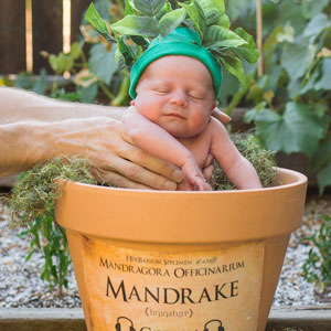 Harry Potter-Themed Newborn Photo Shoot With A Screeching Mandrake Baby Goes Viral