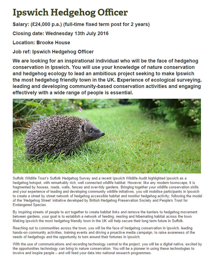 hedgehog-officer-ipswich-3
