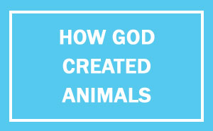 13+ Hilarious Explanations How God Created Animals