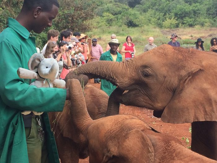 Making Friends At The David Sheldrick Wildlife Trust In Kenya