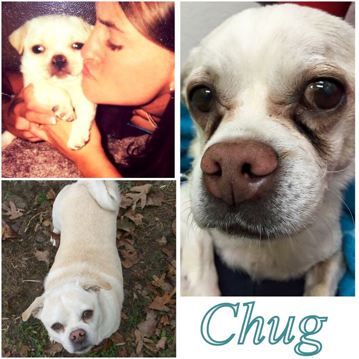 """My Chuggy Wuggy As A Puppy, """"teenager"""" And On The Day He Had To Be Put To Sleep."""