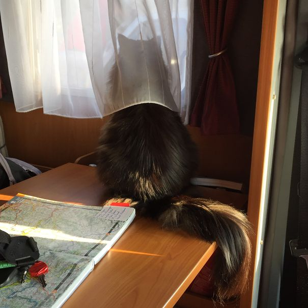 Cassiopée : The French Cat In The Motorhome