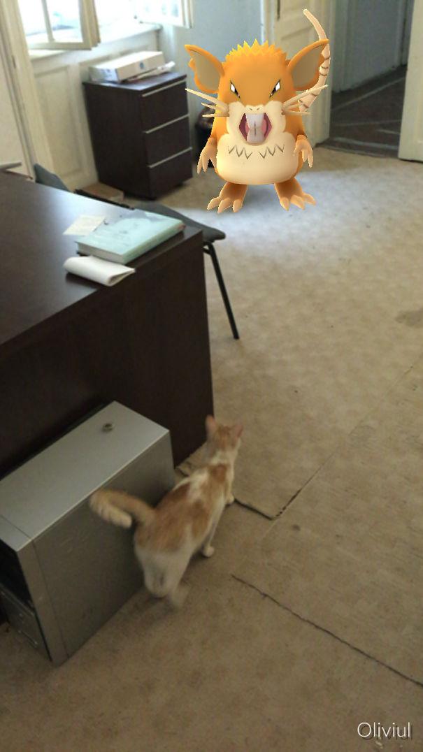 'rat' And Cat .
