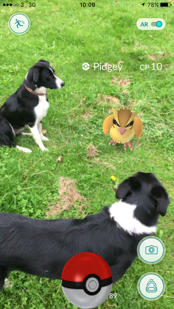 How Many Collies Does It Take To Catch A Pidgey?