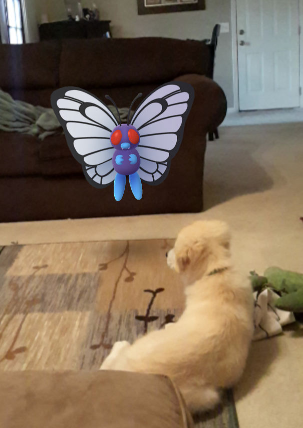 Jenner Stopped What He Was Doing To Watch Butterfree.