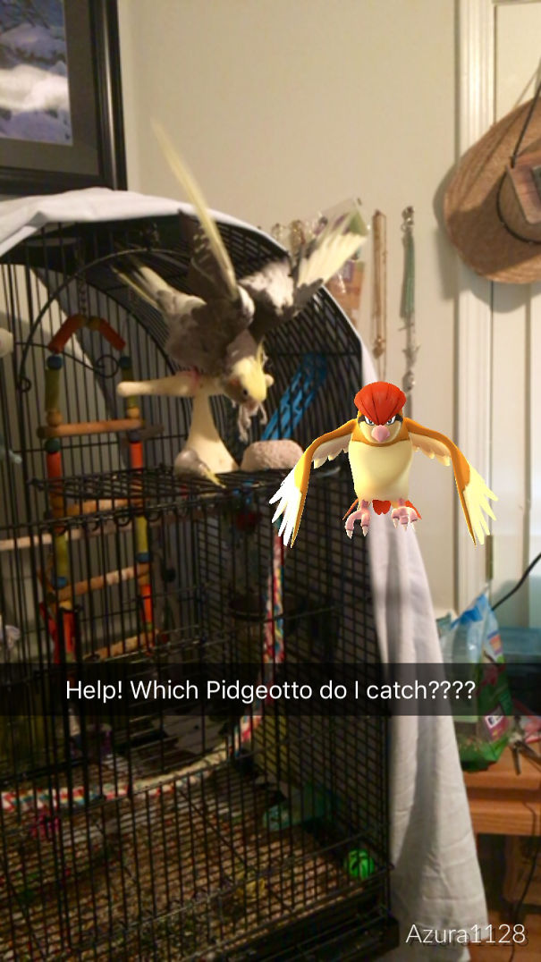 She's Ready To Fight That Pidgeotto