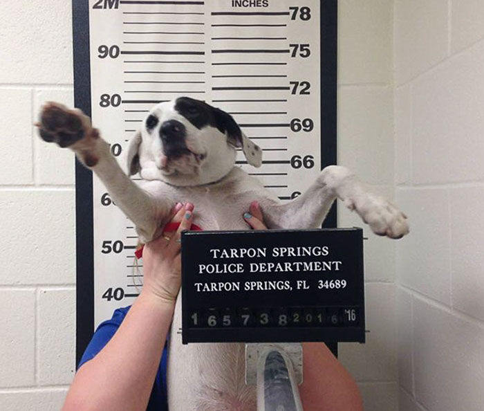 Police Sees A Suspicious Dog, Arrest Her For Being Dangerously Cute