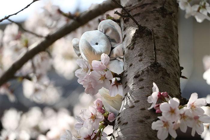 Obligatory Sakura Picture