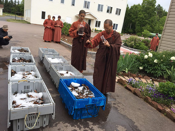 monks-release-600-lobsters-ocean-3