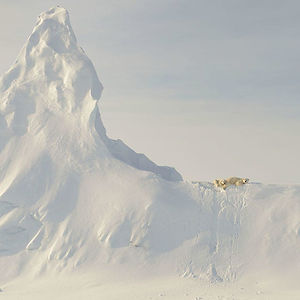 Honorable Mention, Nature: Bears On A Berg, Nunavut, Canada