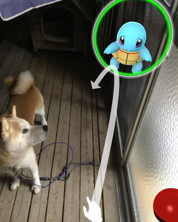 My Genius Dog Is Catching Pokemons Too