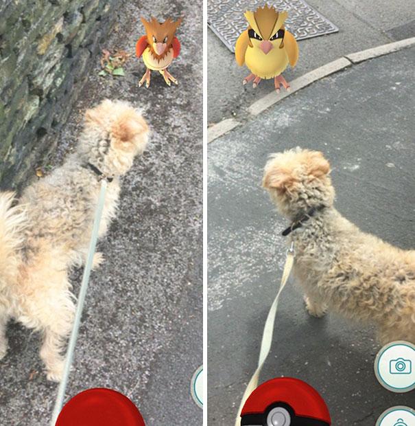 Pokemon Go Making Dog Walking Enjoyable