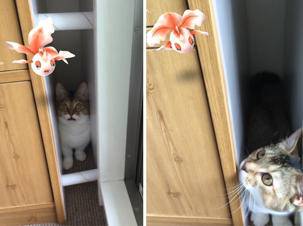Looks Like My Cat Is Catching Pokemons