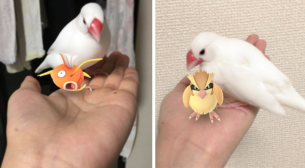 My Parrot Apparently Has A Superpower To See The Pokemons