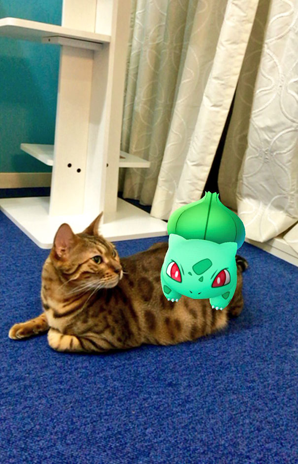 This Pokemon Has The Courage To Appear So Close