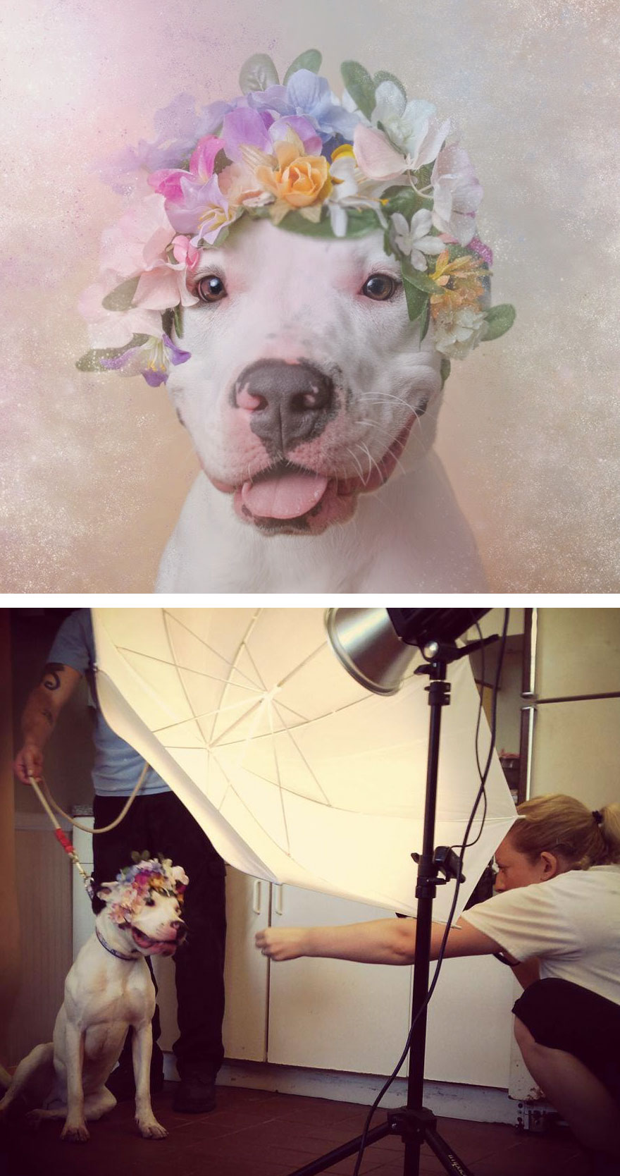 Behind The Scenes Of Pit Bull Flower Power Photoshoot