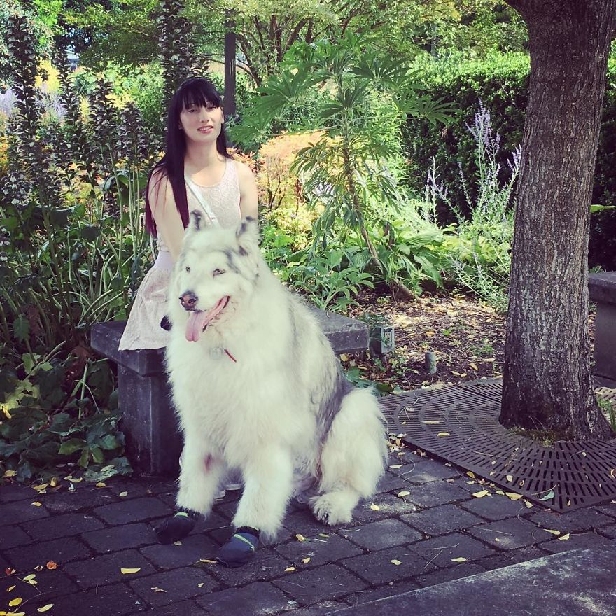 Direwolves Are Real (Sort Of)