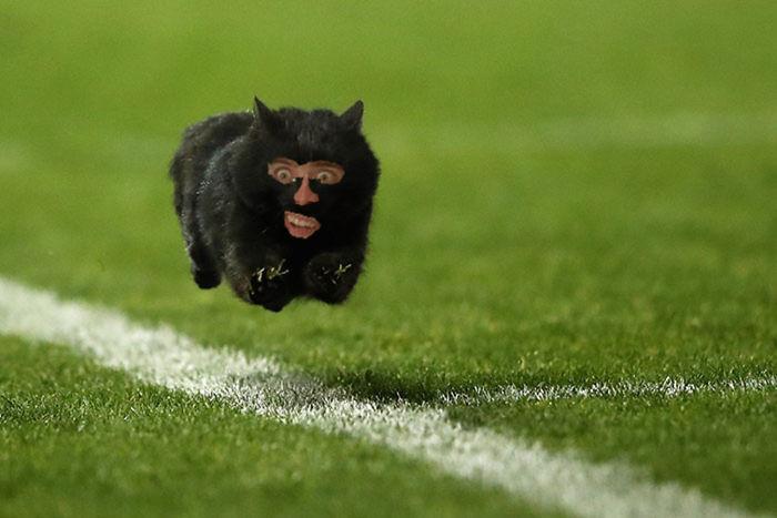 Nicholas Cage Cat