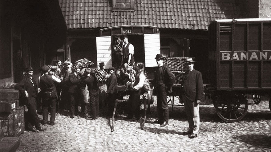 The First Bananas In Norway, 1905