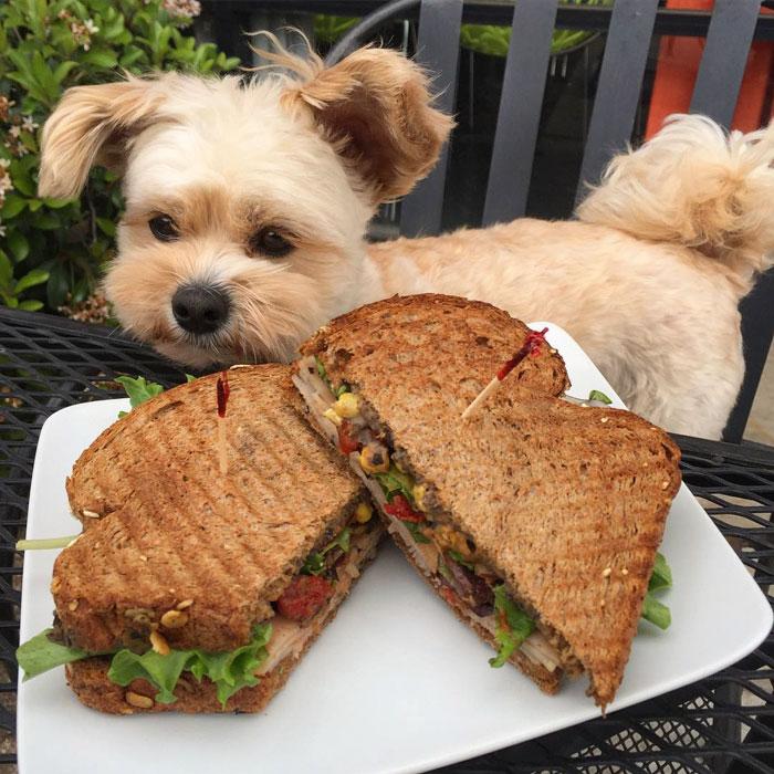 Comida de perro