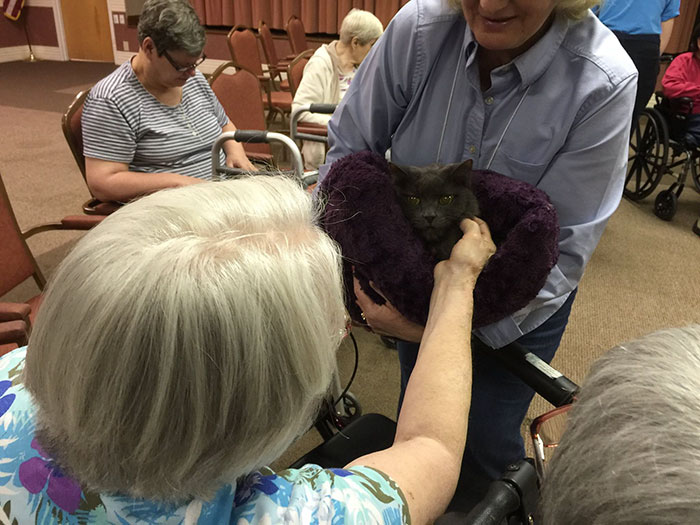 senior-cats-visit-nursing-home-pals-ohio-alleycat-resource-4