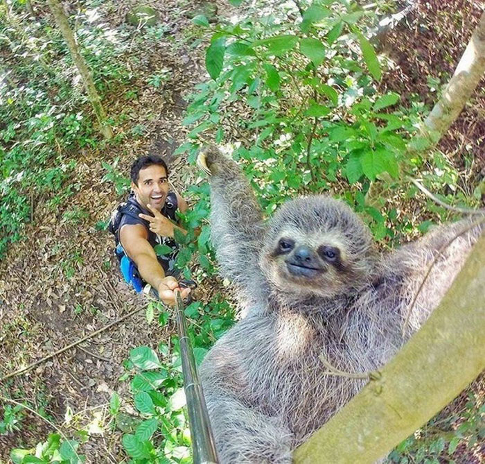sloth-selfie-stick-nicolas-husclar-1