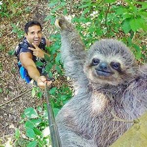 Sloth Selfie A.K.A Slofie