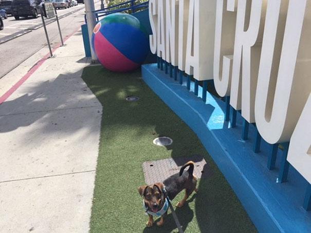 smiling-dog-adopted-nala-california-3