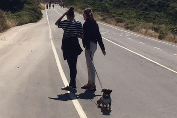 smiling-dog-adopted-nala-california-4