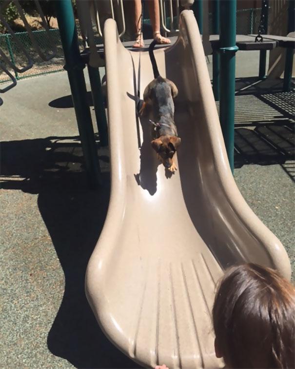 smiling-dog-adopted-nala-california-5
