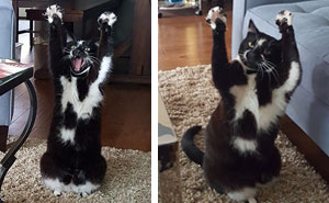This Cat Keeps Putting Its Paws In The Air And Nobody Knows Why