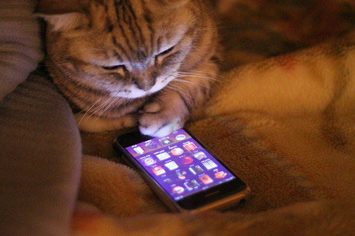 What If Cats Could Text? Woman Shares Conversations With Her 3 Rescued Cats