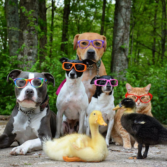 inusual-animales-amistad-dogs-cat-patos-Kasey-y-su-pack-15a