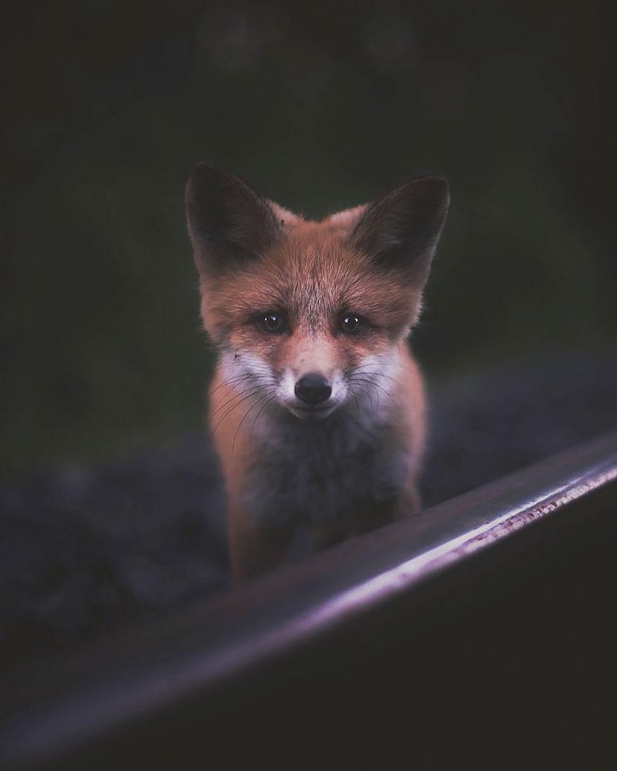 wild-animal-photography-konsta-punkka-1