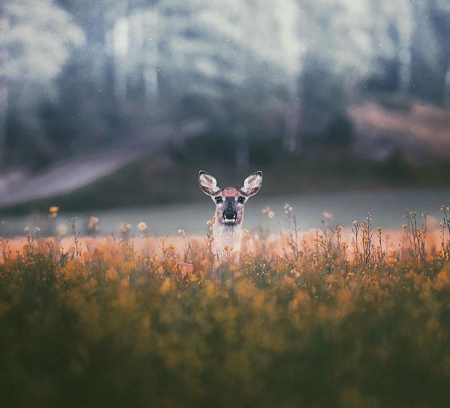 wild-animal-photography-konsta-punkka-11