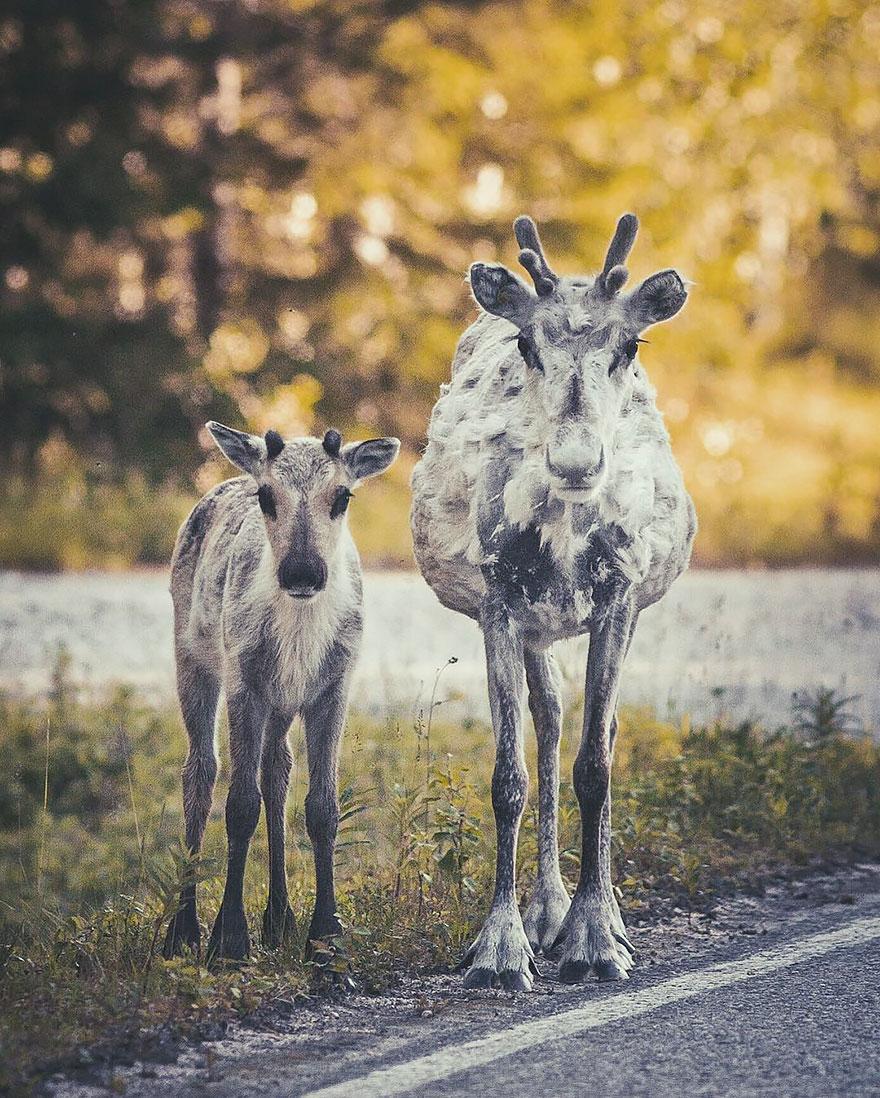 wild-animal-photography-konsta-punkka-13