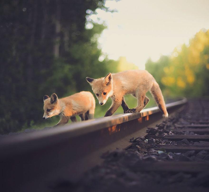 wild-animal-photography-konsta-punkka-20
