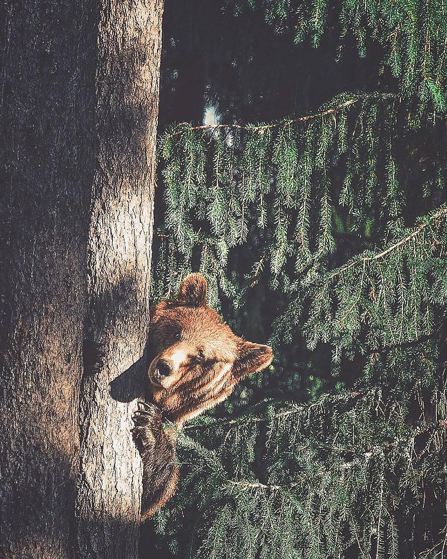wild-animal-photography-konsta-punkka-7